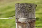 Spirit in a post