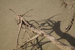 Stange beast on the beach