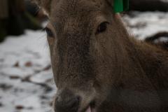 Milu, Wuppertal Zoo