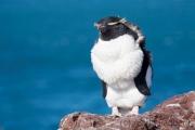 037_isla_pinguino_1682_web