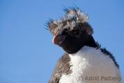 018_isla_pinguino_1657_web