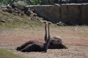 Emu, Zoom Gelsenkirchen