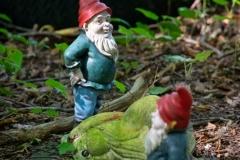 Chatting garden gnomes (Gartenzwerge)