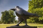 Selm, Arie van; Die Krähe / The Crow (schreitend), 2010