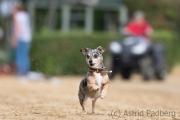 Every-Dog-Race 2019