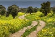 Besparmak Trail, North Cyprus