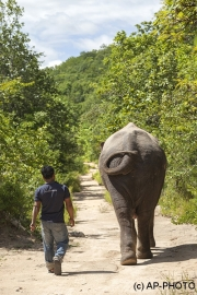 Pmom Tamao Reserve, Cambodia
