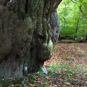 Naturpark Wildeshausener Geest