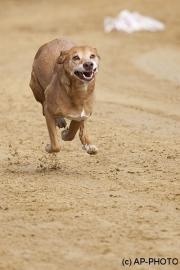 Every-Dog-Race, Gelsenkirchen