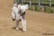 Every-Dog-Race