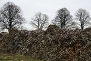 Chopped trees, Otzenrath