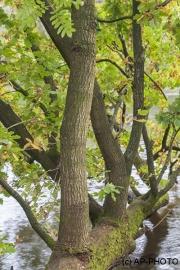 Woodlands, Ahlhorner Fischteiche