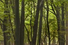 Woodlands, Naturpark Wildeshausener Geest